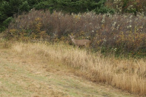 whidbey island, washington state parks, fort casey, washington wildlife