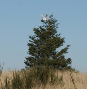 snowy owls, birding with children, ocean shores, damon point