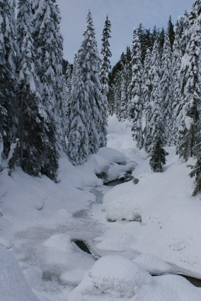smithbrook road snowshoe, stevens pass, winter hiking