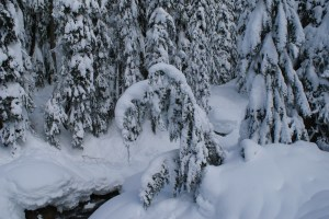 snow on trees, snowshoeing, Stevens Pass, Smithbrook Road