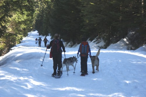 kids and dogs, winter hiking, snowshoeing with children and dogs, Gold Creek Pond