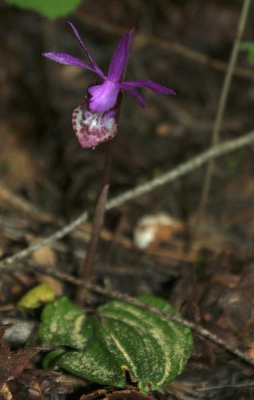 washington native wildflowers, lake easton state park
