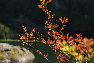 heather lake, fall hikes with kids, fall colors