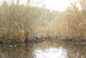 narbeck wetland, washington birds