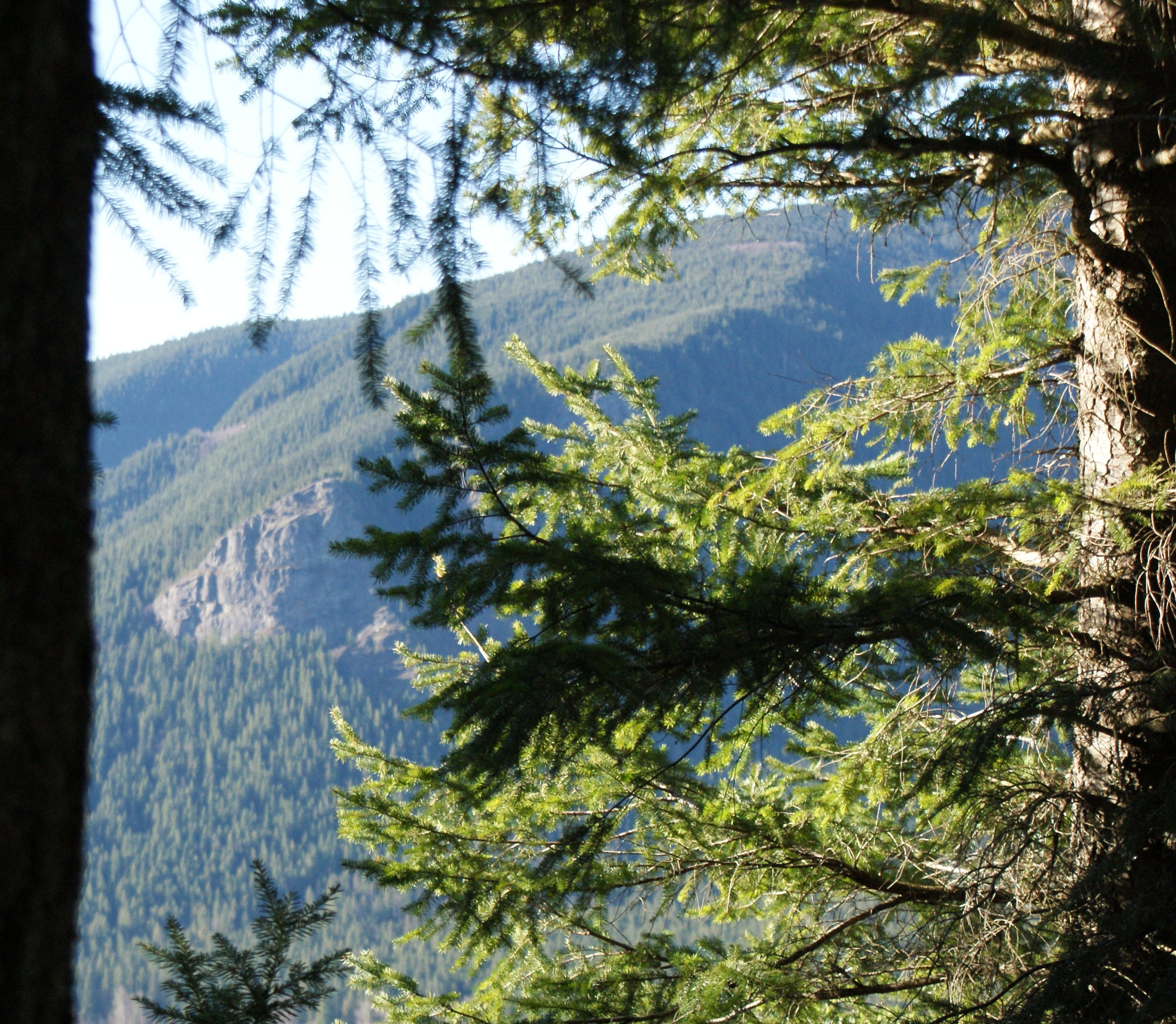 hiking with children, north bend wa, winter hikes with kids