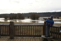 nisqually, birding with children, kids in nature