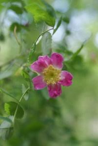 paradise valley conservation area, washington native plants,