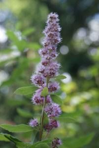 bridle trails sp, washington native plants