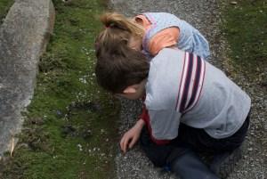 kids in nature, bellevue botanical garden