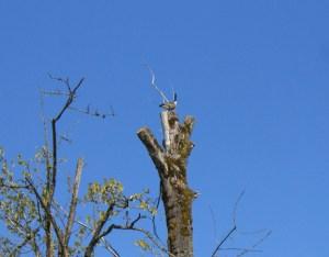 birding Nisqually NWR