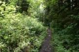 beaver lake trail, hiking with children, darrington hiking