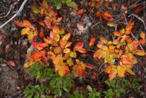 fall colors, fall foliage, best hikes for fall