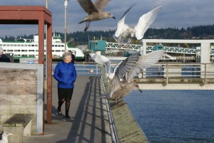 birding Edmonds, birding with children, Edmonds fishing pier