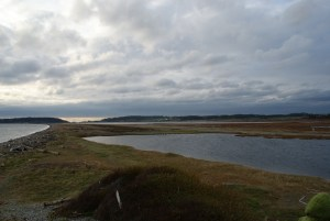 fort casey, whidbey island, birding whidbey
