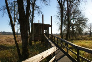 ridgefield nwr, birding in winter, washington