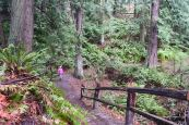 winter walks with children, best hikes for kids, larrabee state park, bellingham