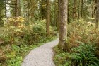 shadow of the sentinels trail, hikes for kids, baker lake trails