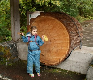 Giant Tree Cross Section