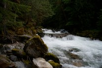 newhalem area hiking, rock shelter trail, best hikes for kids