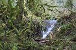 Stimpson family nature reserve, nature walks for children, bellingham