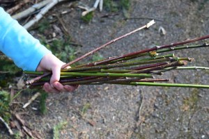 sehome hill arboretum, nature walks, kids, bellingham