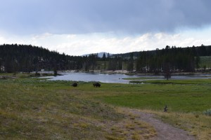 yellowstone, wildlife, road trip