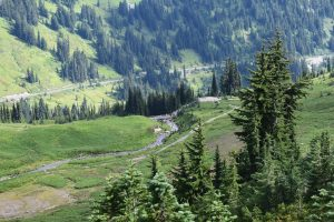 skyline trail, paradise area, mount rainier national park