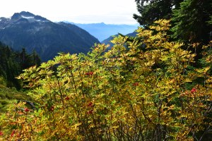 chain lakes trail, mt. baker, best hikes for kids
