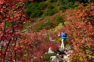 maple heather pass, fall hiking, best hikes for kids, north cascades