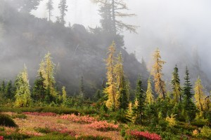 north cascades, heather pass, fall colors, yellow larches, fall hiking