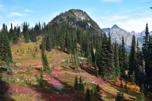 fall colors, heather maple pass trail, north cascades, fall hiking, best hikes for kids