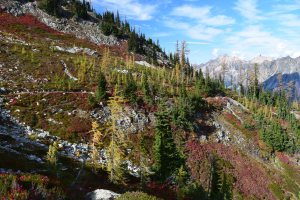 heather maple pass trail, best hikes for kids, fall hiking, larches, huckleberries, north cascades