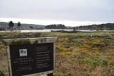 lopez island, hikes for kids, rainy day hiking, birdwatching,