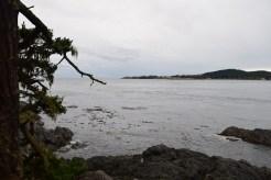lopez island, nature walk, forest, san juans, hikes for kids, birding, bird watching, kelp