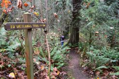 sammamish hikes, fall hiking, hikes for kids, nature walk