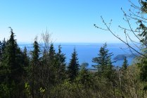 rock creek trail, bellingham hikes, larrabee state park, hikes for kids, geology hikes