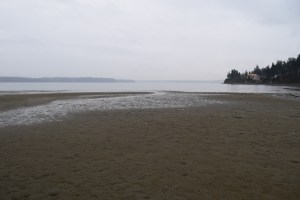 tolmie state park, hikes for kids, beaches, spring, sand dollar beds