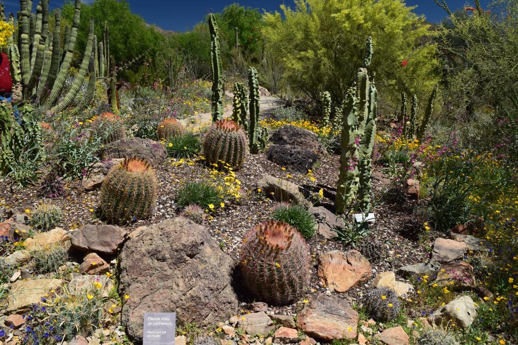 tucson, cacti, desert, spring, arizona