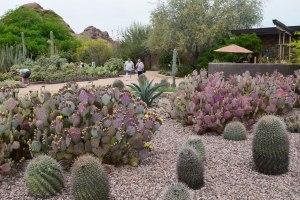 tourist, arizona, desert, cacti, flowers,