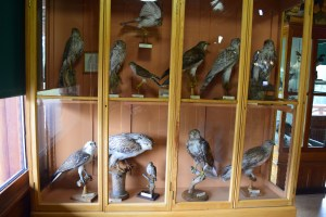 banff historical museum, banff national park, canada national parks, alberta, raptors
