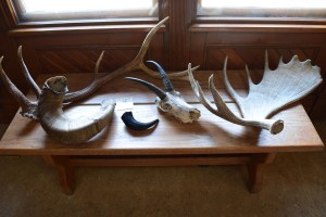 banff history museum, banff national park, canada national parks, natural history, horns and antlers
