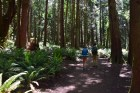larrabee state park, fragrance lake trail, hikes with kids, forest, kids in nature