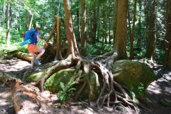 fragrance lake trail, larrabee state park, hiking with kids, summer,