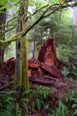 schmitz preserve park, best hikes for kids, seattle urban hiking, old growth forest