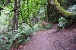 schmitz preserve park, best hikes for kids, urban hiking, nature play,