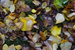carkeek park, hikes for kids, fall, autumn, nature