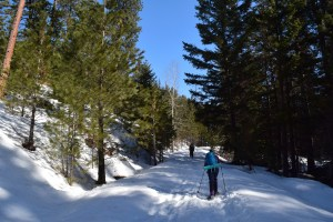 pipe creek sno-park, winter snowshoes for kids, blewett pass, winter, ponderosa pines
