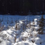 pipe creek sno-park, blewett pass, best snowshoes for kids, winter hiking, washington