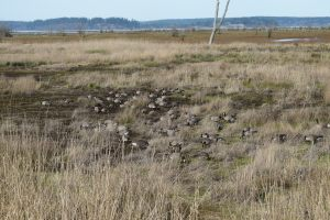 billy frnak jr nisqually wildlife refuge, birding, hikes for kids