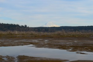 billy frank jr nisqually wildlife refuge, views, hikes for kids, spring, low tide